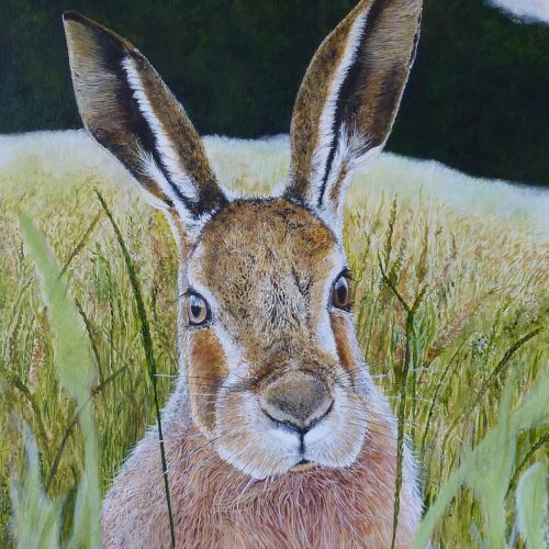 Hare 45x60cm - 50 limited edition prints available