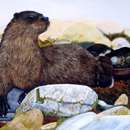 Otter 61x45cm - 100 limited edition prints available
