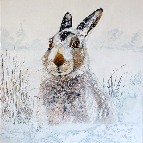 Winter Hare 40x50cm - 50 limited edition prints available